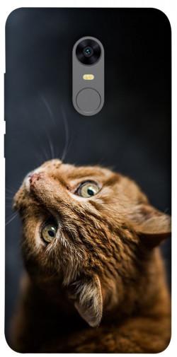Чехол itsPrint Рыжий кот для Xiaomi Redmi 5 Plus / Redmi Note 5 (Single Camera)