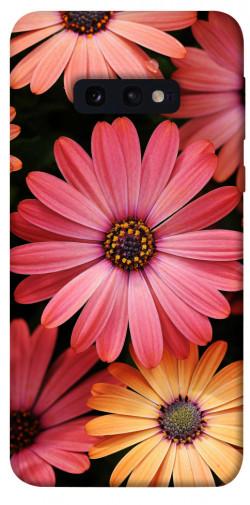 Чехол itsPrint Осенние цветы для Samsung Galaxy S10e