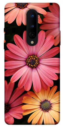 Чехол itsPrint Осенние цветы для OnePlus 8