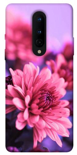 Чехол itsPrint Нежная хризантема для OnePlus 8