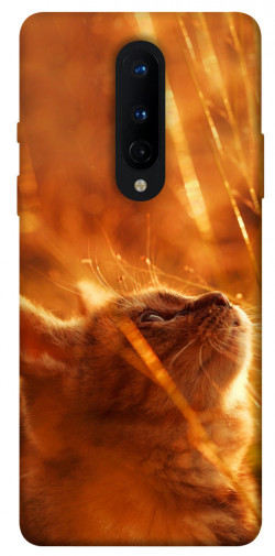 Чехол itsPrint Magic cat для OnePlus 8