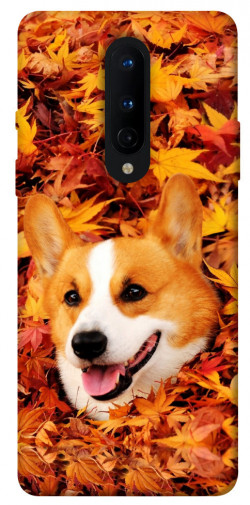 Чехол itsPrint Корги в листьях для OnePlus 8