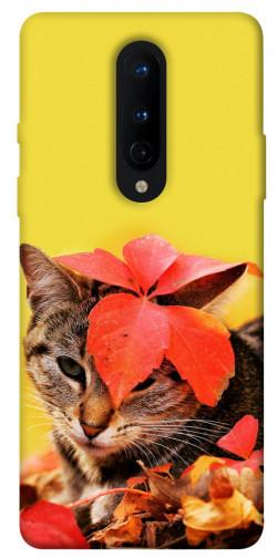 Чехол itsPrint Осенний котик для OnePlus 8