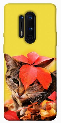 Чехол itsPrint Осенний котик для OnePlus 8 Pro