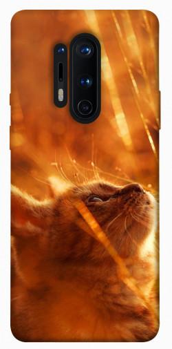 Чехол itsPrint Magic cat для OnePlus 8 Pro