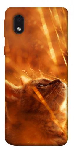 Чехол itsPrint Magic cat для Samsung Galaxy M01 Core / A01 Core