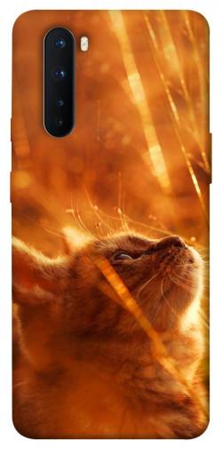 Чехол itsPrint Magic cat для OnePlus Nord