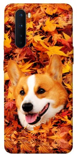 Чехол itsPrint Корги в листьях для OnePlus Nord