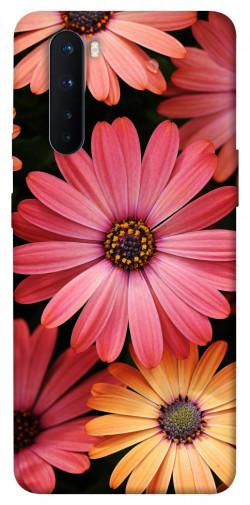 Чехол itsPrint Осенние цветы для OnePlus Nord