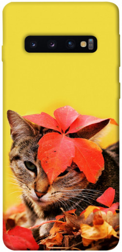 Чехол itsPrint Осенний котик для Samsung Galaxy S10